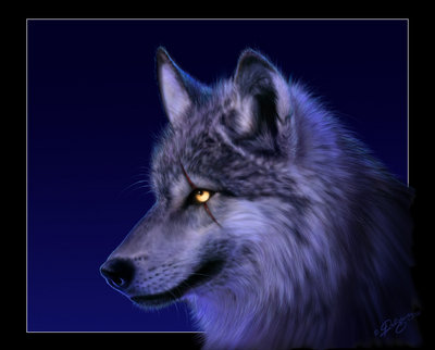 wallpaper wolf. Wolf wallpaper by *deligaris